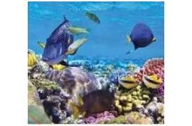 Podwodne skarby